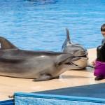 Севастопольский дельфинарий