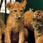 """Зоопарка """"Сказка"""" Ялта"""